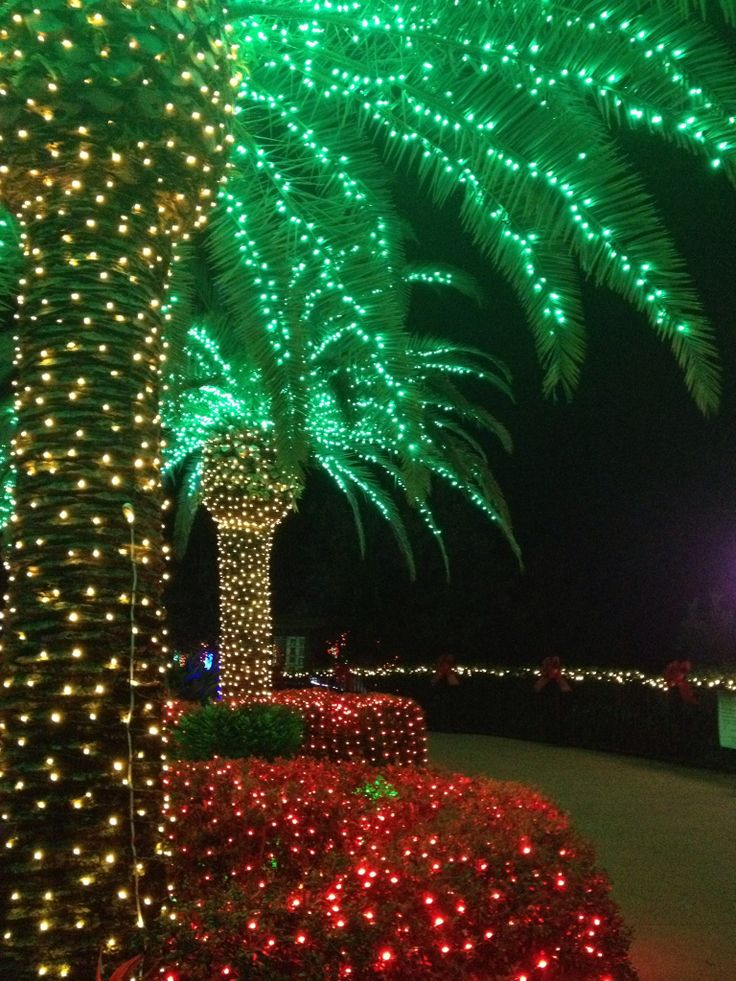1000 Images About Christmas Palmtree On Pinterest
