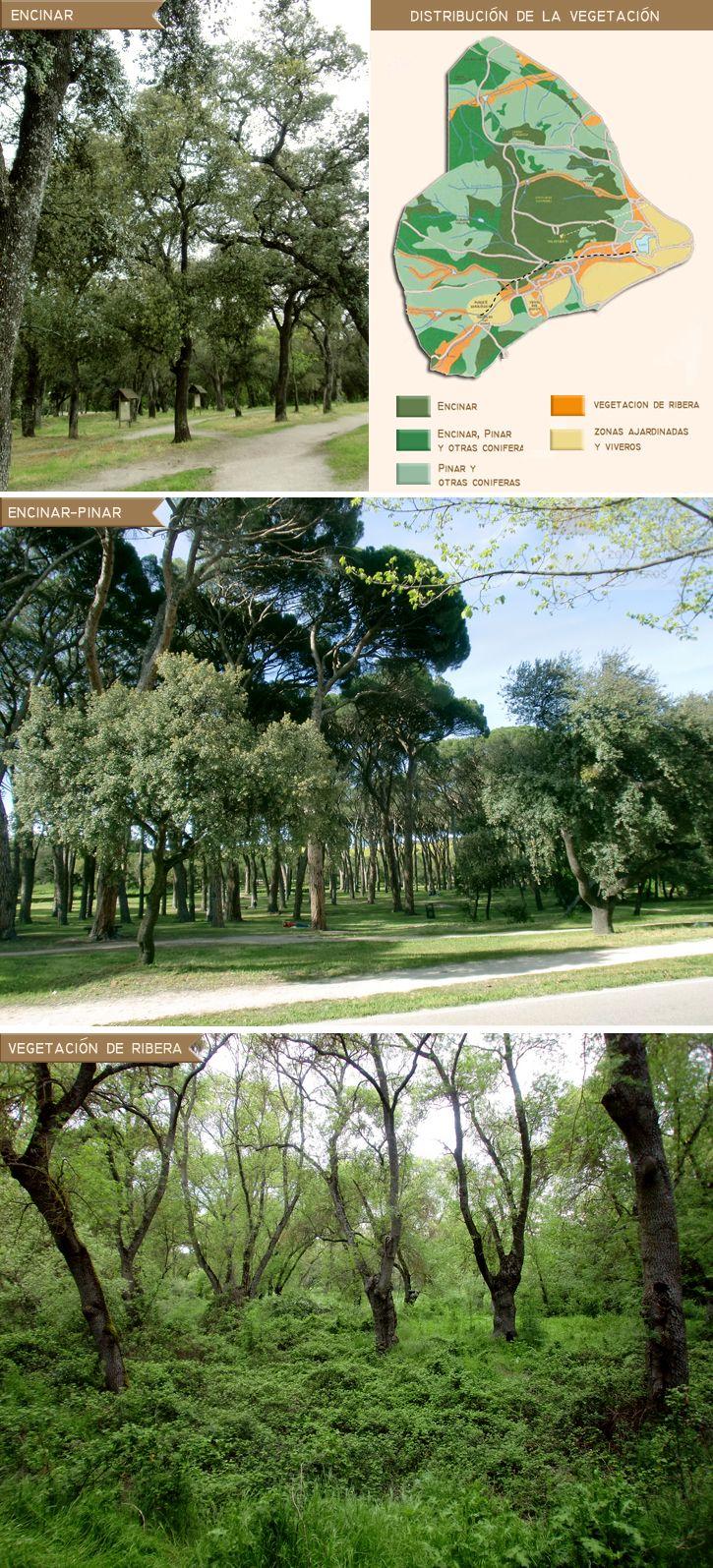 Buscamos crear un oasis verde en ese día a día donde suelen acompañarte caminos de asfalto y montañas de cemento.