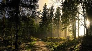 PRZYSTAŃ: Pieśń lasu