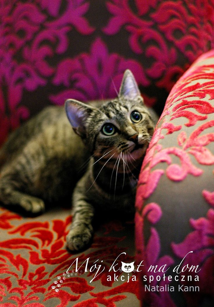 Mój kot ma dom - Akcja społeczna: IV.032