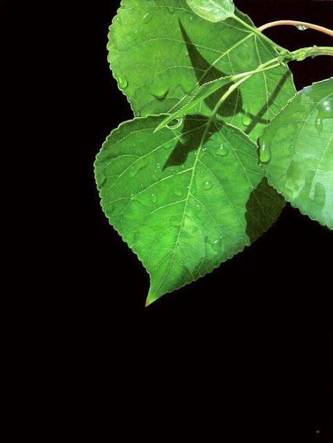 Λεύκα (2007)