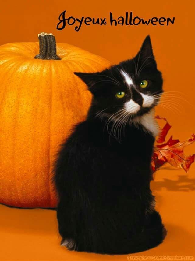 2388 best halloween cats images on pinterest black cats. Black Bedroom Furniture Sets. Home Design Ideas