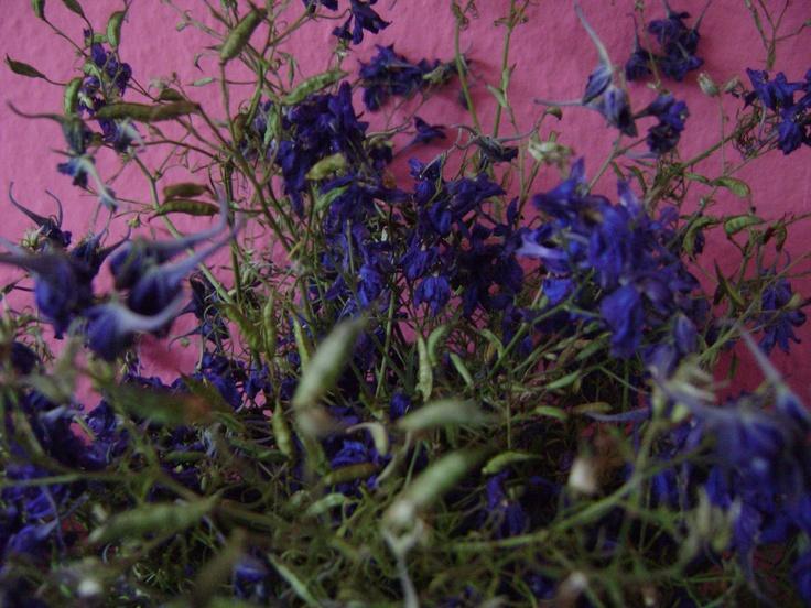 Purple wild flowers dry