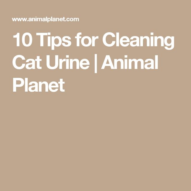 10 Tips for Cleaning Cat Urine | Animal Planet