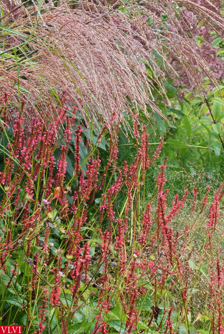 30 08 in de tuin bij piet oudolf my photography for Designing with plants oudolf