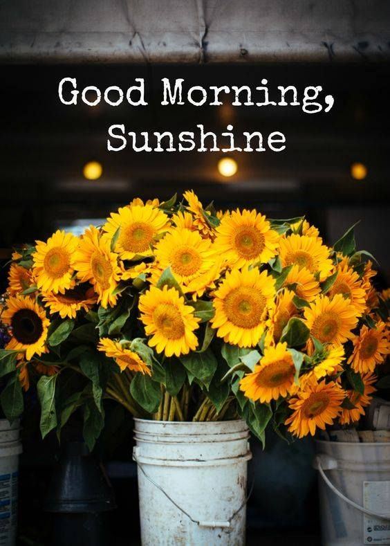Good Morning Sunshine Facebook : Images about have a good day sunshine on pinterest