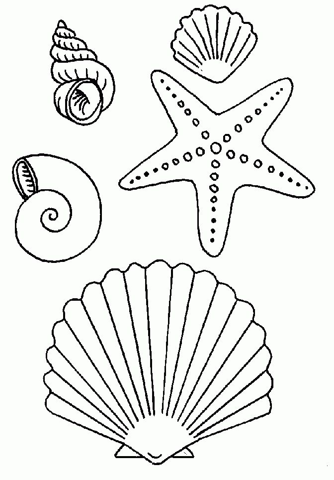 starfish coloring pages for tracing - photo#26