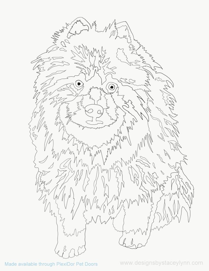 keeshond puppy coloring page
