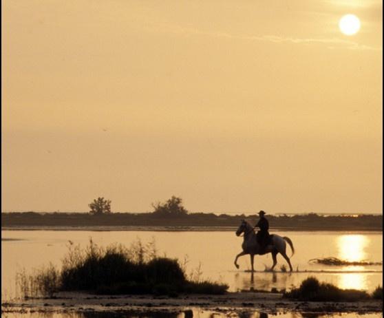 Les cabanes de Cacharel - Galerie photo de chevaux de Camargue
