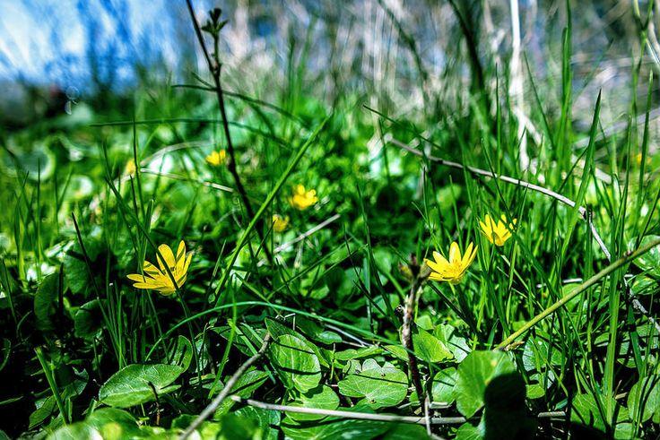 Napfűrdőzés...Long-erdő természetvédelmi terület,Sárospatak környékén...