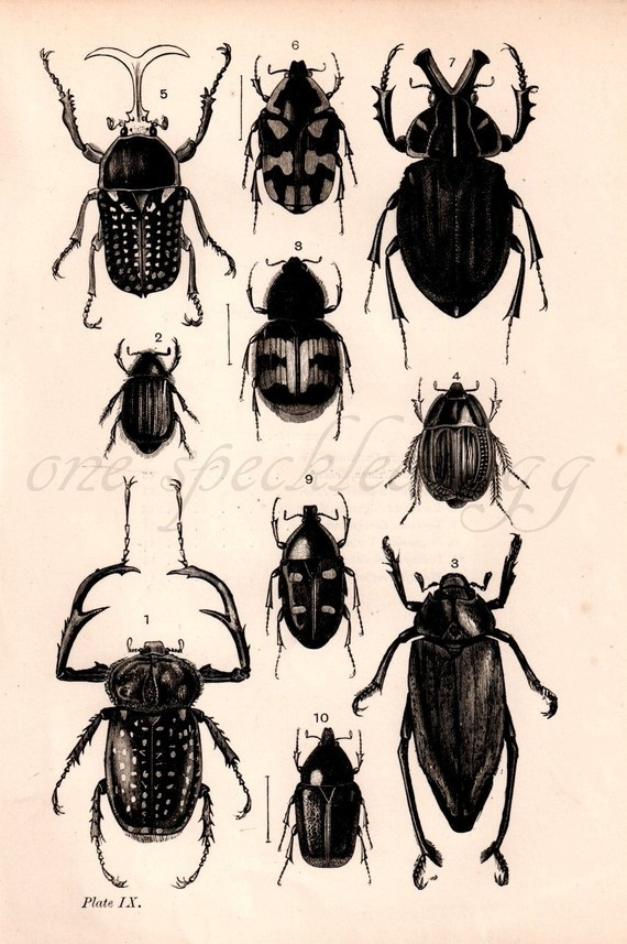 Antique entomology bookplate $10