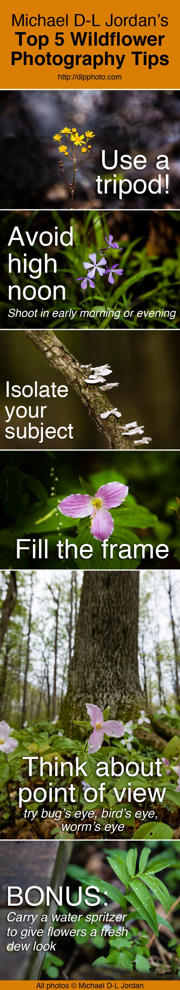 Happy Nature Photography Day! Check out these wildflower photo tips by Michael D-L Jordan. http://dlpphoto.com