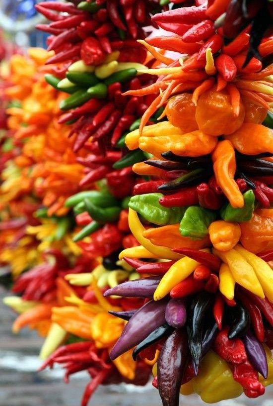 kolorowe papryczki