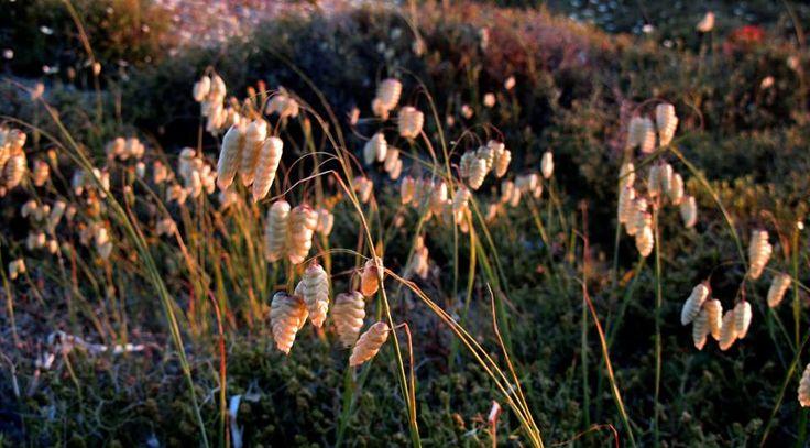 Flora of Lefkada
