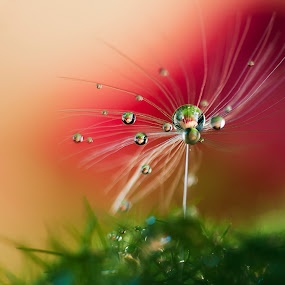 Dew Drop on a Seed