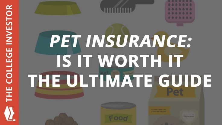 The Ultimate Pet Insurance Guide: Is Pet Insurance Worth ...