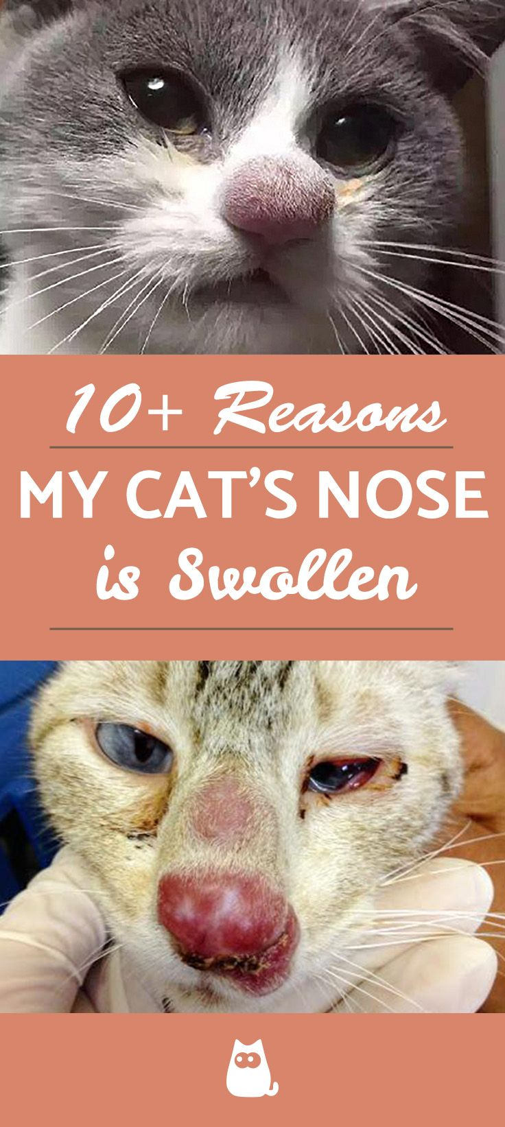 My Cat Has A Swollen Nose Causes And Treatments In 2020 Cat Nose Cats Nose