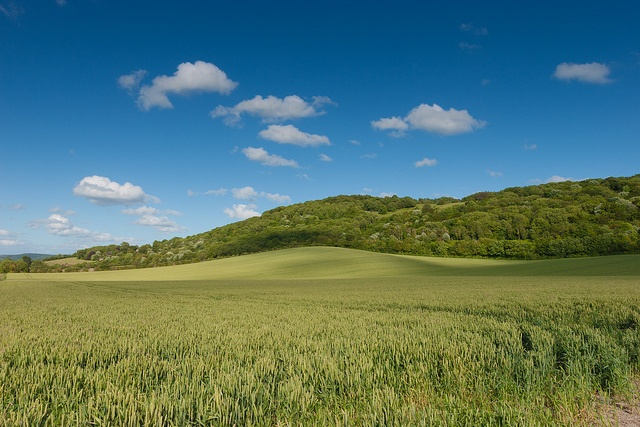 Chinnor Hill by tim_geach, via Flickr