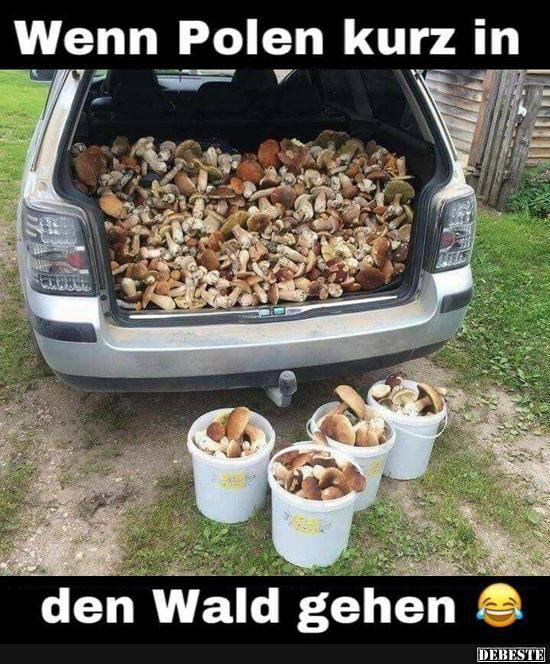 Wenn Polen kurz in den Wald gehen..