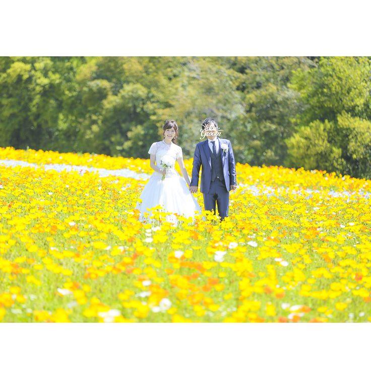 ✧ #前撮り データが届きました♡ . 満開の#ポピー畑 で撮影��✨ 前撮りするなら桜の時期かなぁと思ってたけど 人気のためか都合つかず断念�� でも#お花畑 で写真はずーっと憧れていたので ドレスで撮影できて本当によかった���� . 天候にとても恵まれて撮影日和でした✨ すっぴんで訪問したので もちろん日焼け止めも塗らず 帰ったら結構焼けてた���� 真夏よりまだましかなぁ�� . お金はかかるけど #ロケーションフォト にしてだいぶ満足です�� . #weddingphoto #wedding #ウェディングドレス #ポピー #万博公園 #スタジオtvb #justmarried #結婚式前撮り #卒花嫁 #卒花嫁レポ #2017春婚 http://gelinshop.com/ipost/1517905256243370877/?code=BUQrsnRFZt9