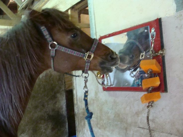 horse stall toys!! So your horses don't crib or weave