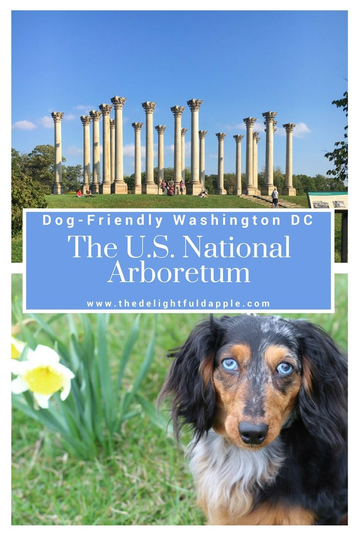 Want To Get Lost In Nature In The Middle Of Washington Dc With Your Pup The U S National Arboretum Is The Perfect Place To Dog Friends Dog Travel Pet Travel