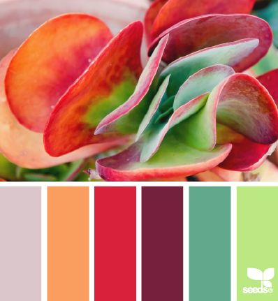 nature hues by design seeds. Plants and flowers are GREAT for color