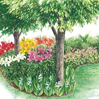 100 best perennials images on pinterest gardening perennial plant colorful shade garden for north end of house have to build up some good soil mightylinksfo Choice Image