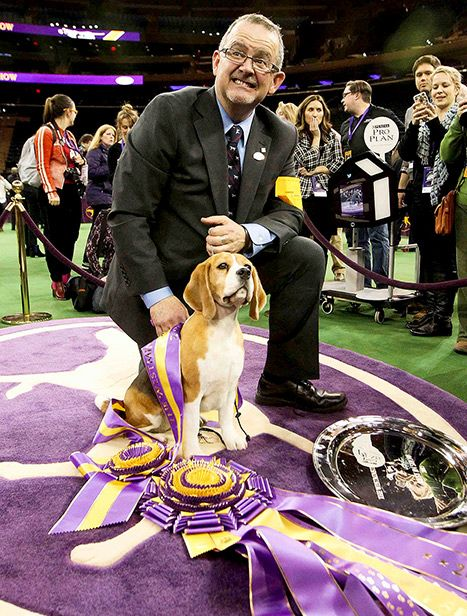 Every dog has its day, and Tuesday, Feb. 17, belonged to one very special beagle. A prime specimen of the breed named Miss P won big at the 139th Annual Westminster Dog Show.