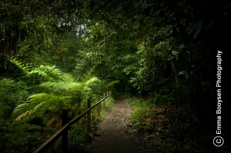 The MacRitchi Trails are the walking trails to the Tree Top Walk in Singapore. These trails are beautiful, it is hard to believe it is in the city. www.photoaday.co.za  Photo by Emma Booysen Photography