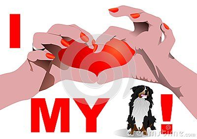 I love my St. Bernard dog isolated on white with Heart shaped hand position.  Vector illustration.