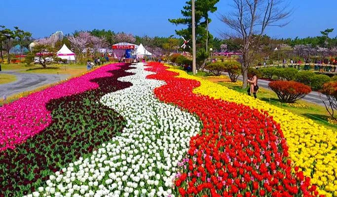 Spring Special Taean Tulip Flower Park 2020 Shuttle Bus Package
