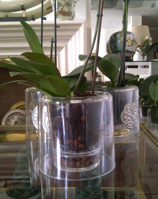 Orchidées.fr