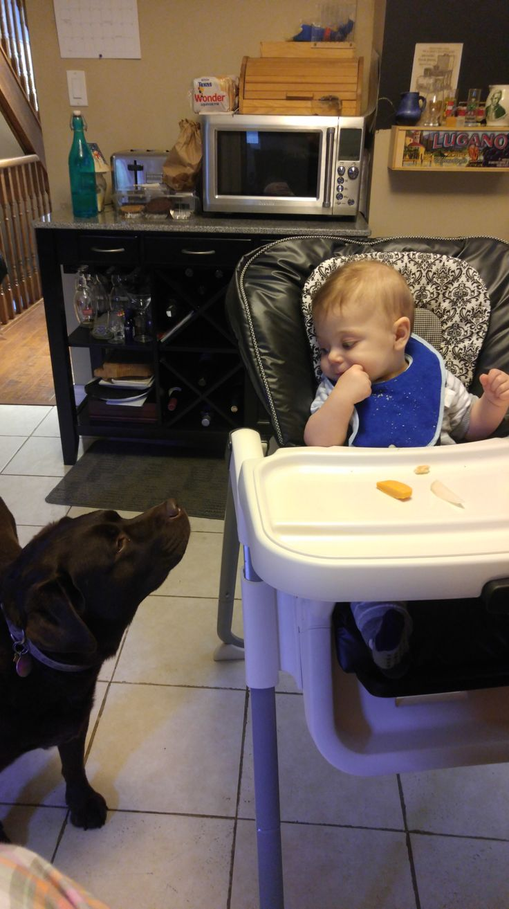 Guest blog by Hazel the dog: The baby is not that impressive.