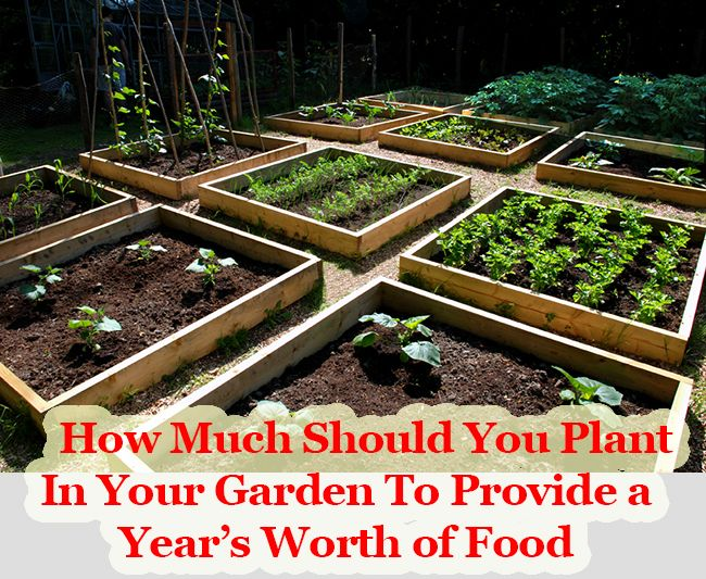 71 Best Diy Home Farming Images On Pinterest Healthy Meals Healthy Eating And Healthy Living