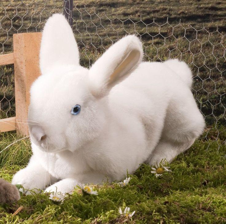 1000+ Ideas About Angora Rabbit On Pinterest