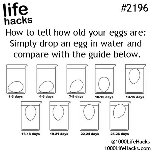 What an egg-cellent guide!