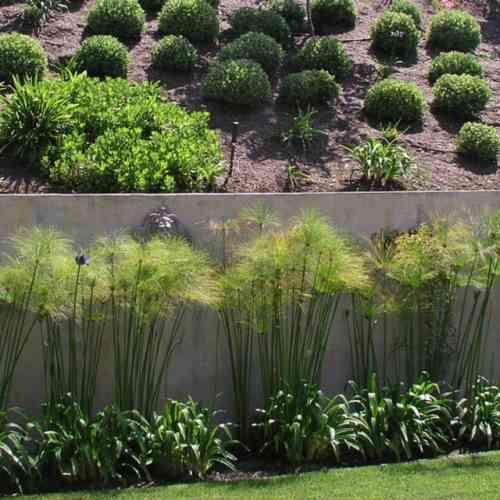 mur de clôture en béton avec des plantes