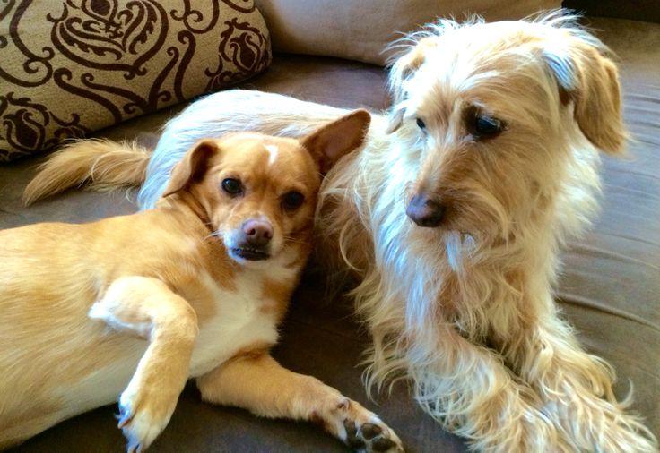 Nicci und Sally