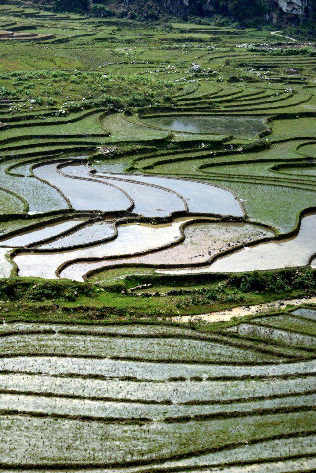 Ryżowe pole Sa Pa #SaPa #Wietnam #Vietnam Natalia Horak pracownik działu Podróży Korporacyjnych