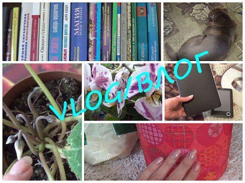 Влог/VLOG домашний (Читалки, Декор, Мебель, Цветы, Собака)