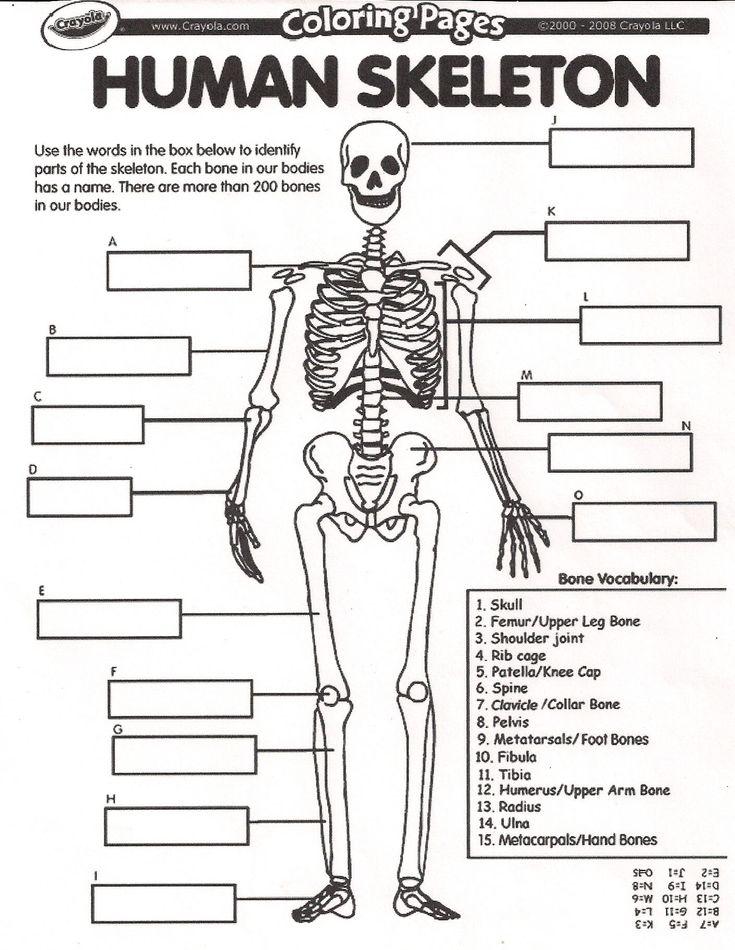 collection of human skeletal system worksheets