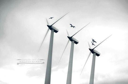Free bird doesn't know what is dangerous, they just fly and might get through or die. Devesh Dev D... #freebird #life #risk #fly #die #windturbine
