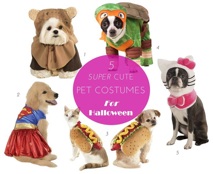 5 Super Cute Pet Costumes For Halloween #pets #dogs #costumes #halloween #holidays