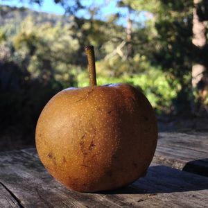 Delicious Tasmanian Apple
