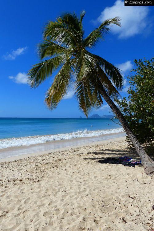 L'anse des Salines. #Martinique.