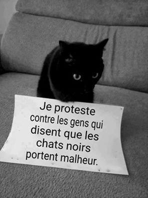 Hello hello everybody qu'en pensez vous les chats noir porte malheur perso je n'y crois pas regardez il est so chou ❤