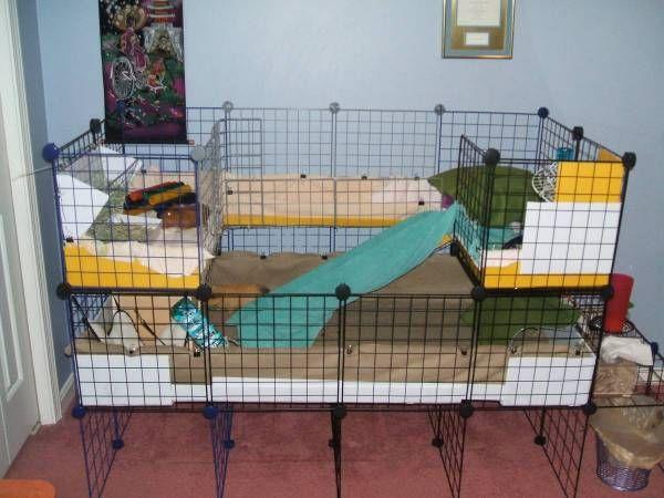 New second level! Diy guinea pig cage, Guinea pigs