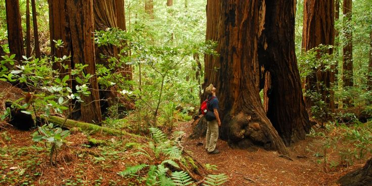 Muir Woods National Monument | Outdoor Project - Wilderness, Parks, California
