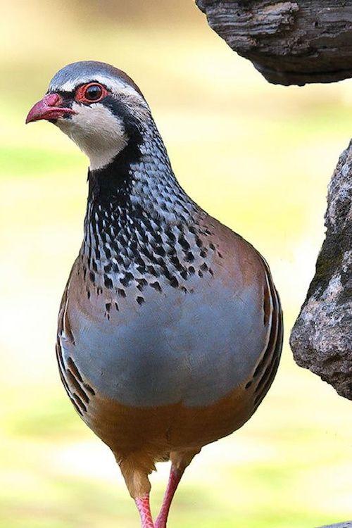 tejido-tweed-ojo-de-perdiz-eye-bird-13